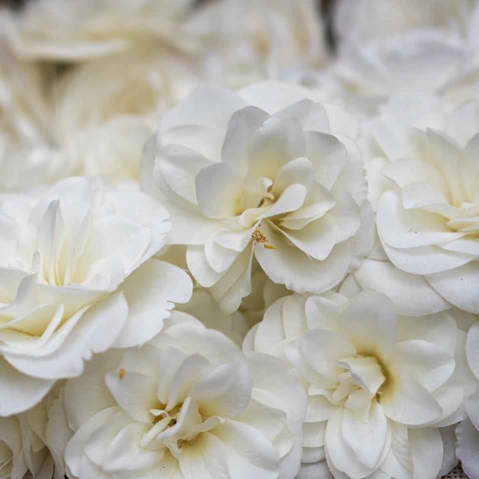 Dans les serres de CHANEL Camellia Alba Tuileries Esprit de Gabrielle espritdegabrielle.com