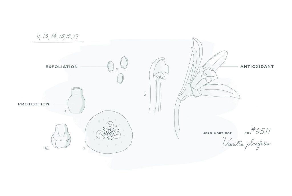 CHANEL BEYOND THE JAR VANILLA PLANIFOLIA Esprit de Gabrielle espritdegabrielle.com