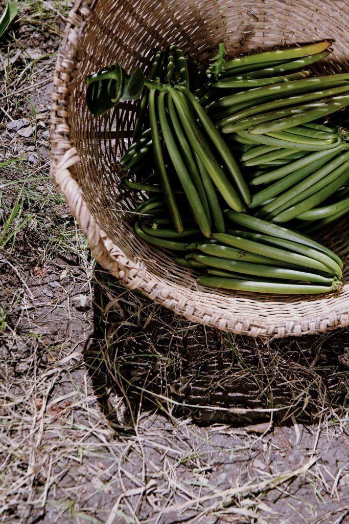 CHANEL La beauté se cultive Vanille Madagascar Esprit de Gabrielle espritdegabrielle.com