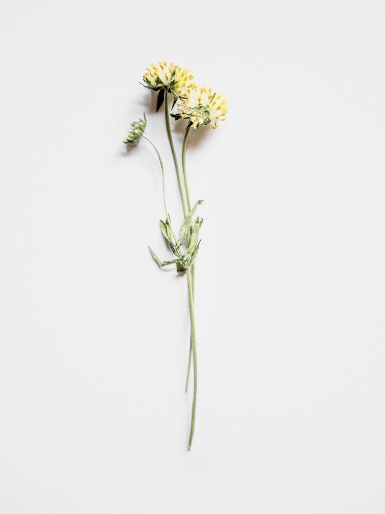 CHANEL La beauté se cultive Solidage Anthyllis France Esprit de Gabrielle espritdegabrielle.com