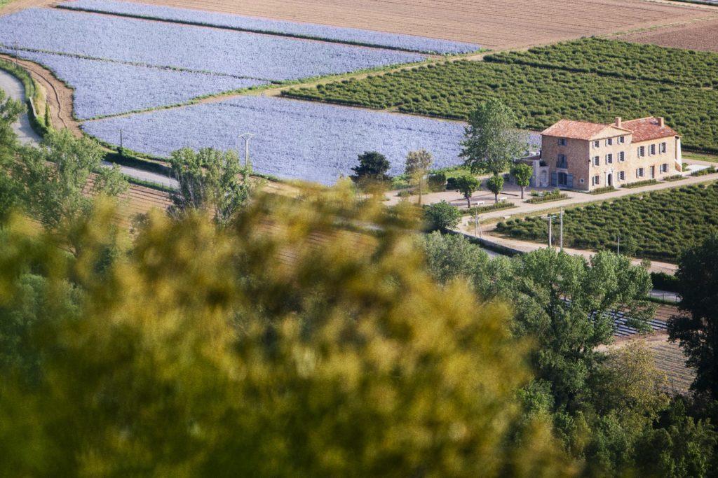 Dans les champs de Chanel Iris pallida Esprit de Gabrielle espritdegabrielle.com
